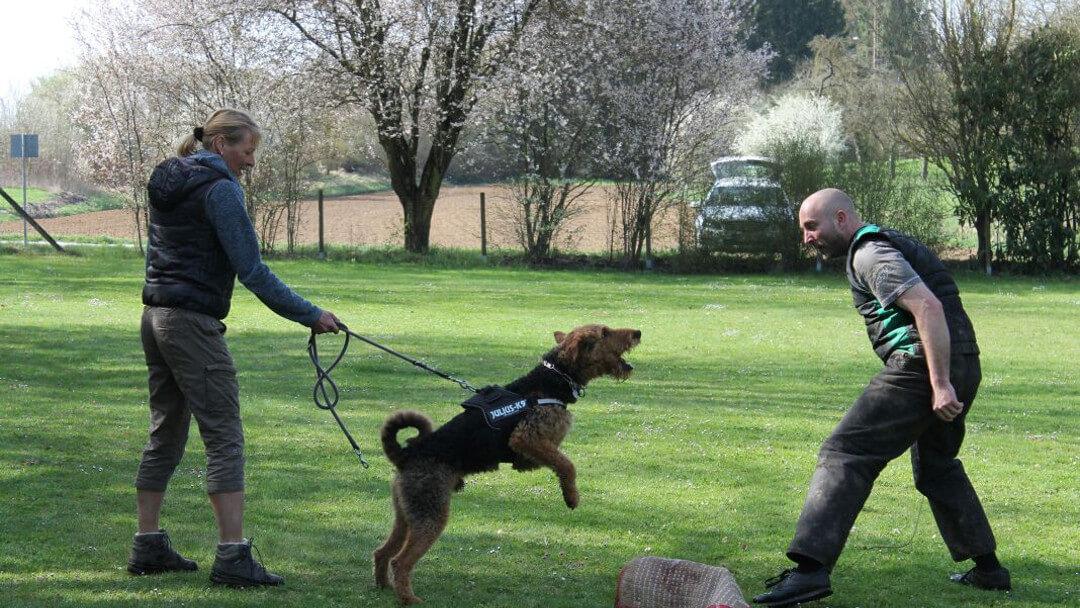 schutzhunde-1080x608-v1